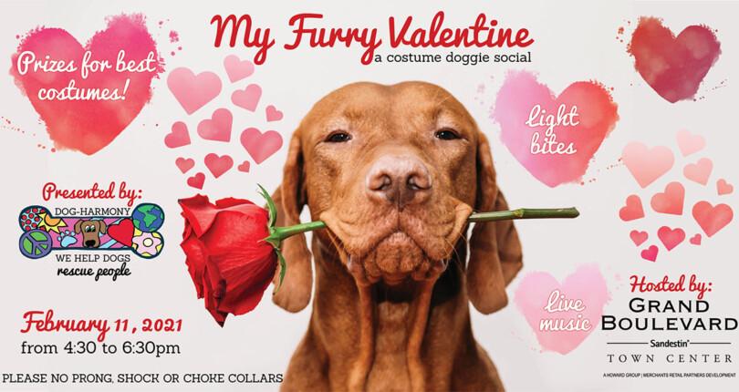 My Furry Valentine Doggie Social